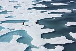 Sea ice ponds